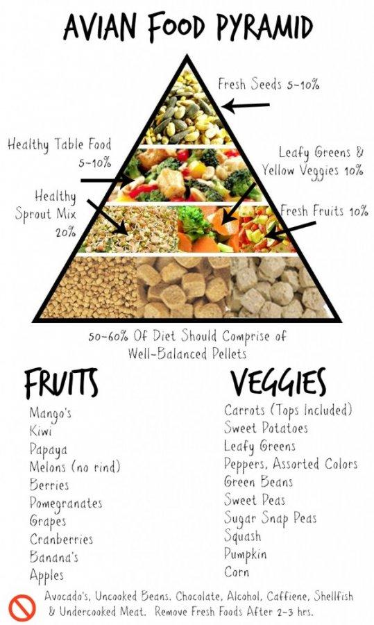 Macaw Food List